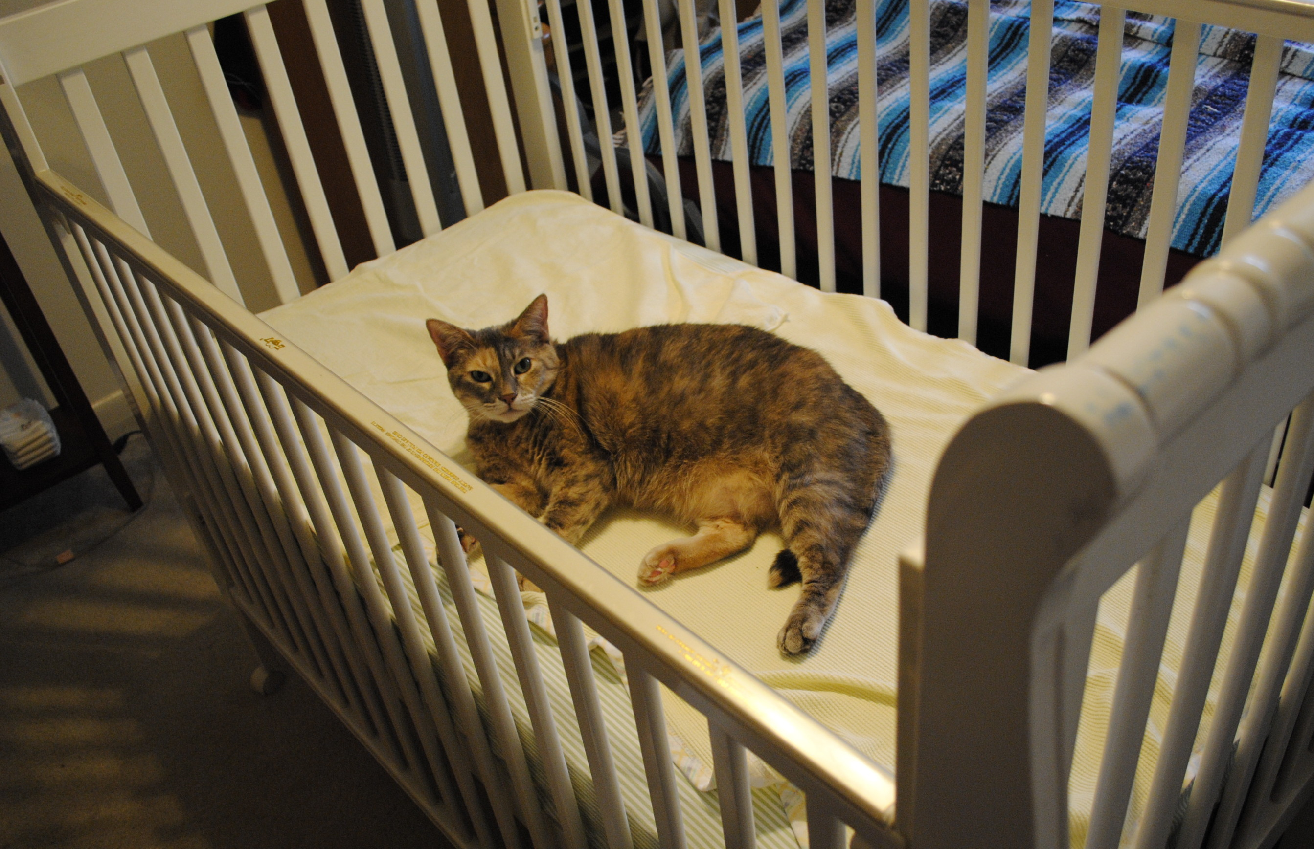 Cat_lying_in_a_human_baby_crib