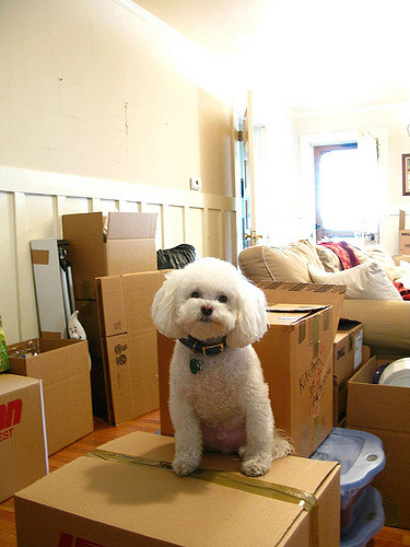 Moving in Together means knowing whose dog it is